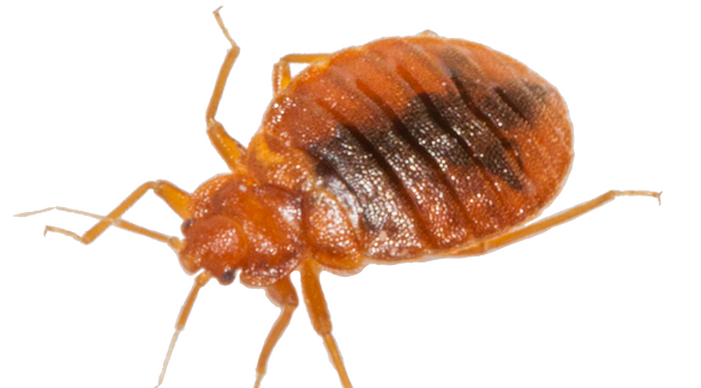 Bed Bug Fumigation